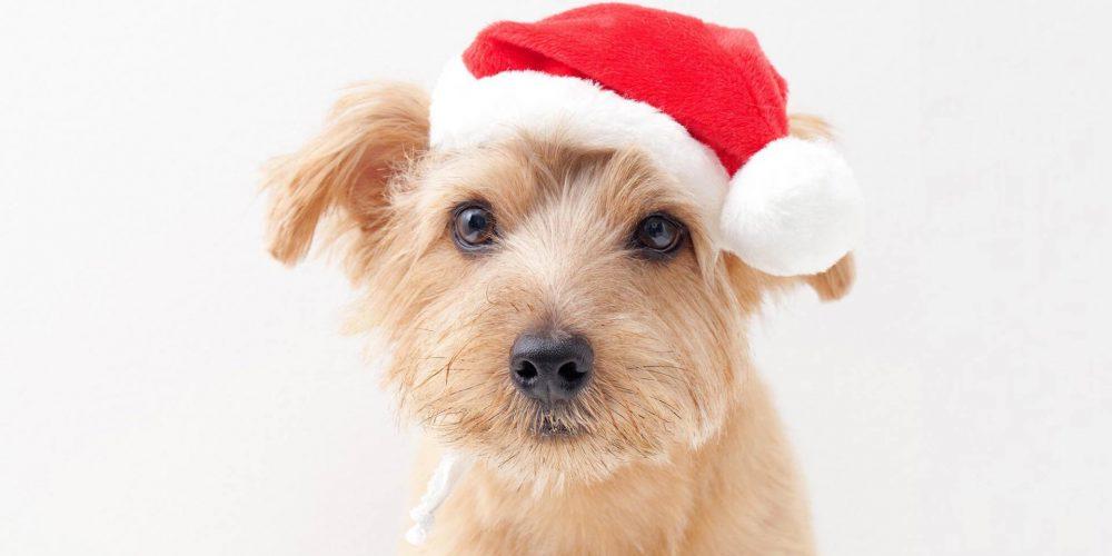 Weihnachtsmarkt_Hunde