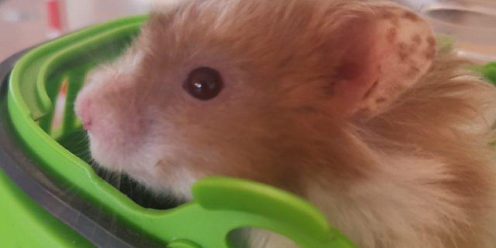 titel bild hamster