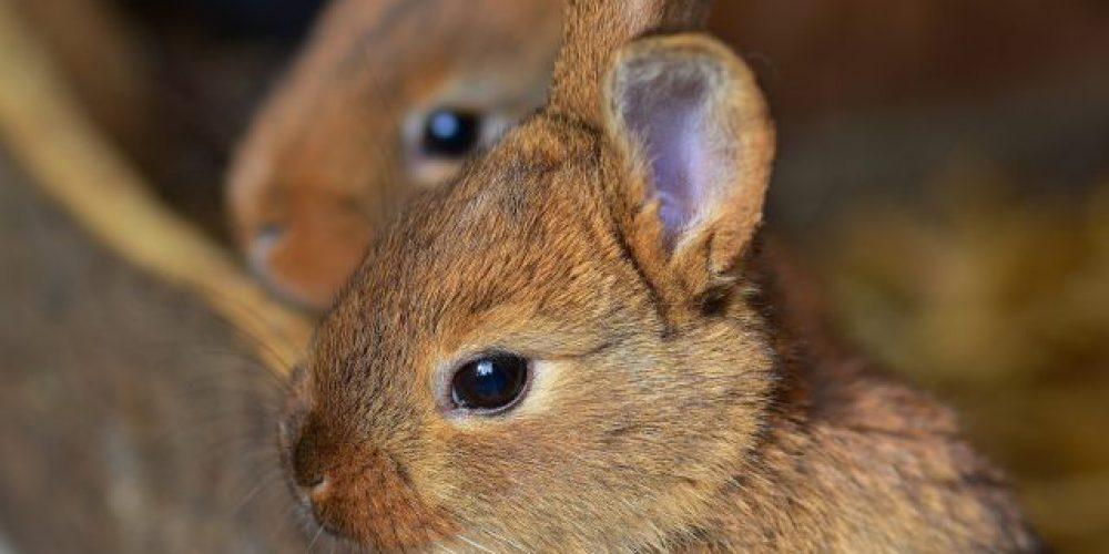 titelbild kaninchen